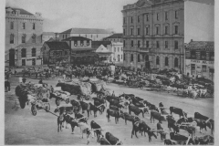 Black and White Images of Old Port Elizabeth