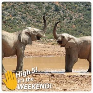 MTN Elephant