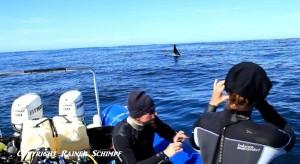 Orca Boat Tourists