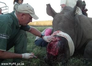 Rhino Thandi 11 June 2013