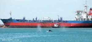 Harbour Humpbacks