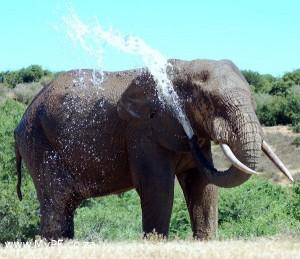 Addo Elephant Waterhole
