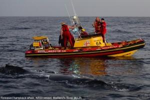 4: Released humpback NSRI vessel right dorsal