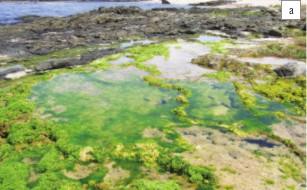 Stromatolite Pool