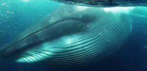 Whale Rainer