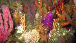 Scuba diving in Port Elizabeth: Evan's peak
