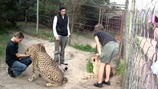 Two other Cheetahs
