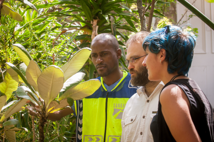 ENDEMIC PLANT SPECIES: Emma Mostert, Rhodes University post-graduate botany student, Professor Craig Peter of Rhodes and Gideon Machete of the South African National Roads Agency Ltd (SANRAL) at the Botanical Gardens in Grahamstown where the Oldenburgia grandis has been relocated to.