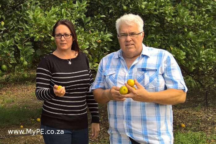Plundered Lemon Orchard