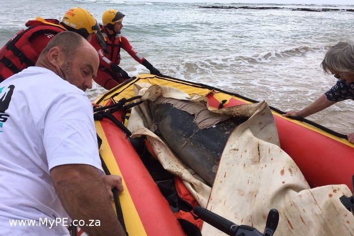 J-Bay Dolphin Rescue