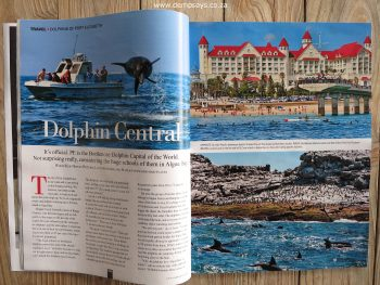 port elizabeth, the bottlenose dolphin capital of the world