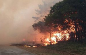 Port Elizabeth Fire