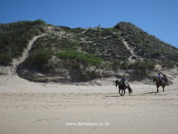 a delight to watch horses take command of the beach