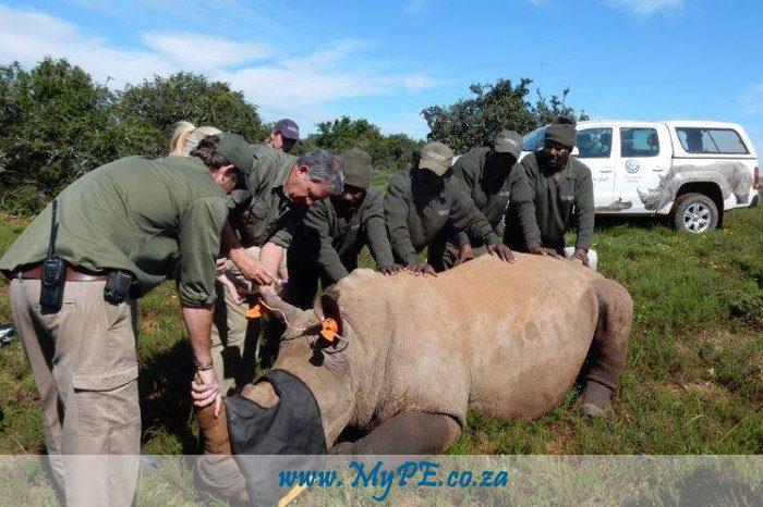 Rhino Darting