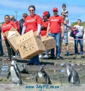 Isuzu Penguins