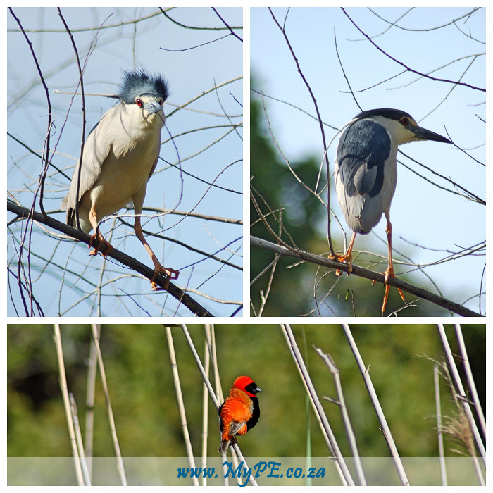 Baakens Valley Birdlife