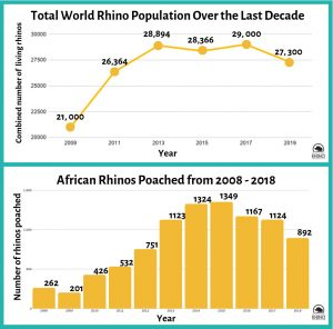 World Rhino Population