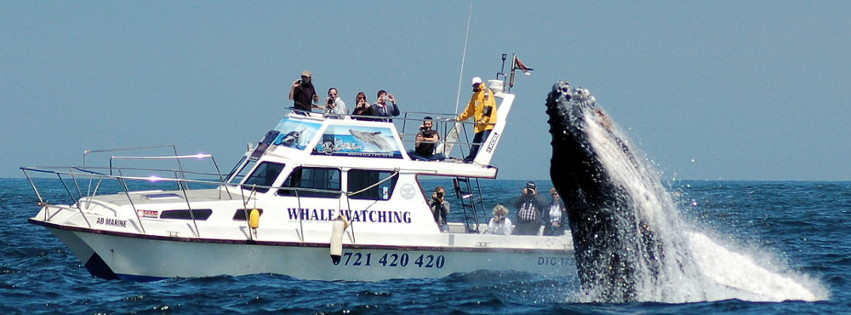 AB Marine Humpback Whale Breach